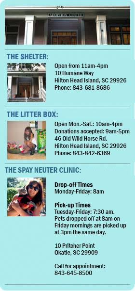 Hilton Head Humane Society info